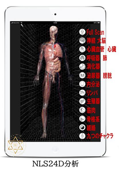 NLS24D分析